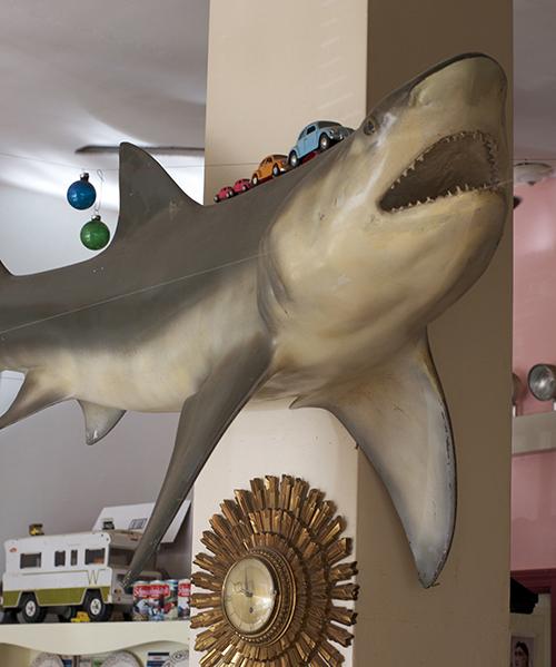 sharkroom